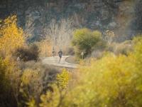Gobbler-Run-2014-120